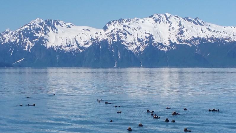 HarborSeals-Valdez