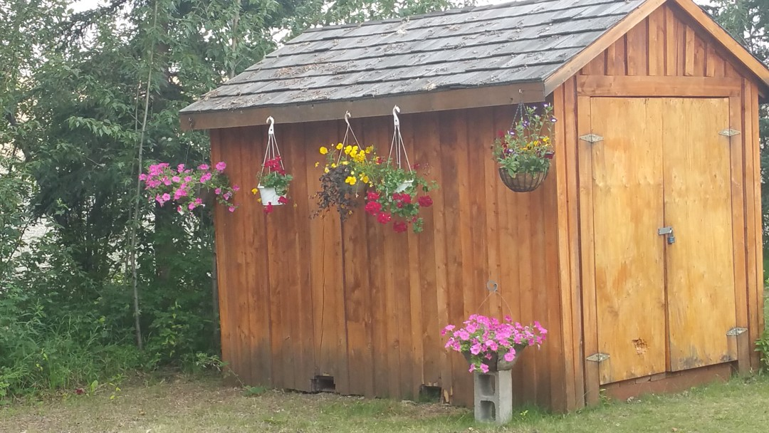 Shed.flowers