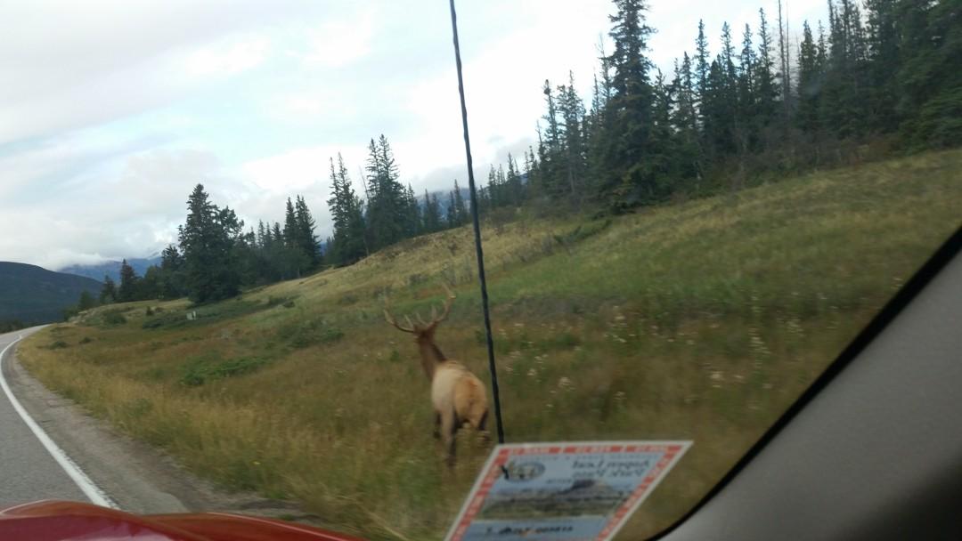 Elk.JasperNP