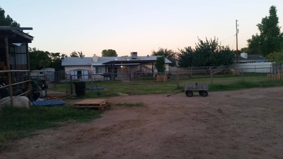 marshalls-back-yard